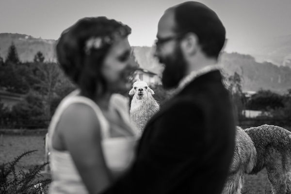 Hilarious-Heartwarming-Wedding-Photos-With-Cute-Animals-As-The-Stars-Of-The-Show-5a5516f8c48f7__880