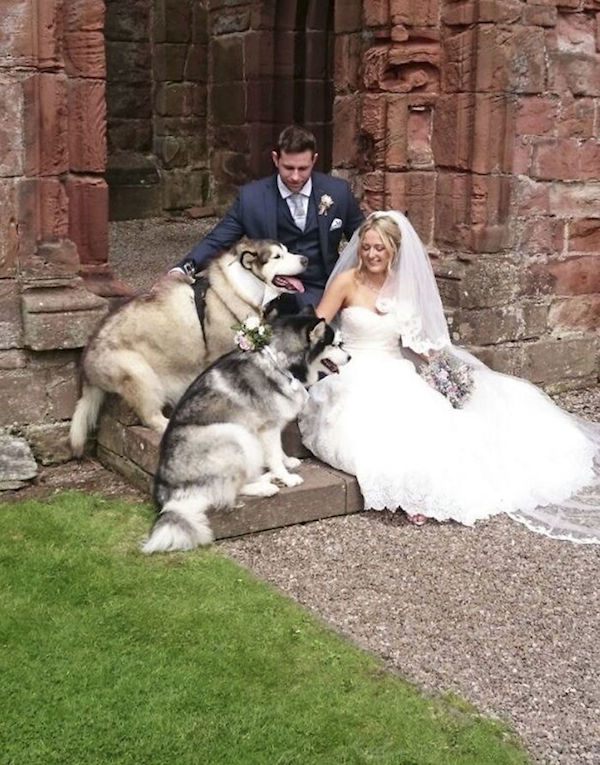 husky-dogs-best-man-maid-of-honor-wedding-10-59818d9b1588e__700