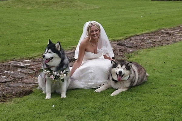 husky-dogs-best-man-maid-of-honor-wedding-12-59818d9fed65e__700